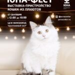 17 сентября состоится выставка-пристройство кошек из приютов