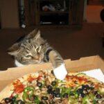 Кот диван порвал