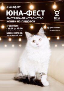 Юна-фест, выставка-пристройство кошек, приют животных