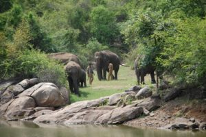 Бангалор. Национальный парк Индии