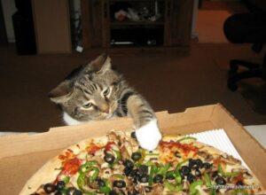 Кот ворует пиццу