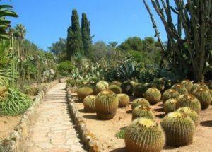 Кактусы, Южная Америка