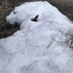 Снег на самоизоляции