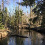 Река Хвоёнка