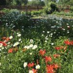 Цветы в деревне