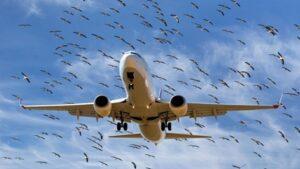 Самолет, птицы